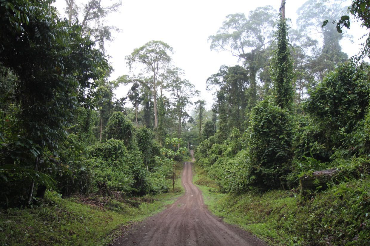Danum valley jungle, 77km from civilisation
