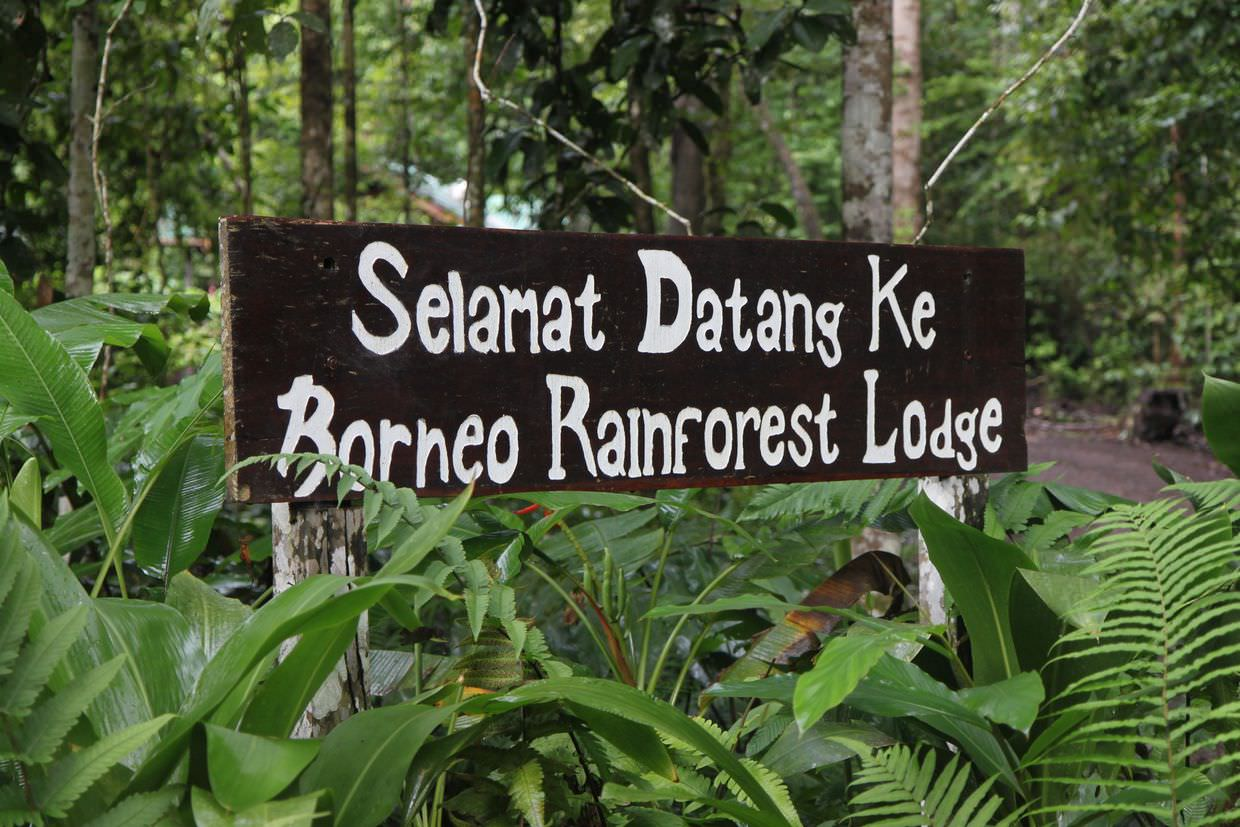 Welcome to the rainforest lodge