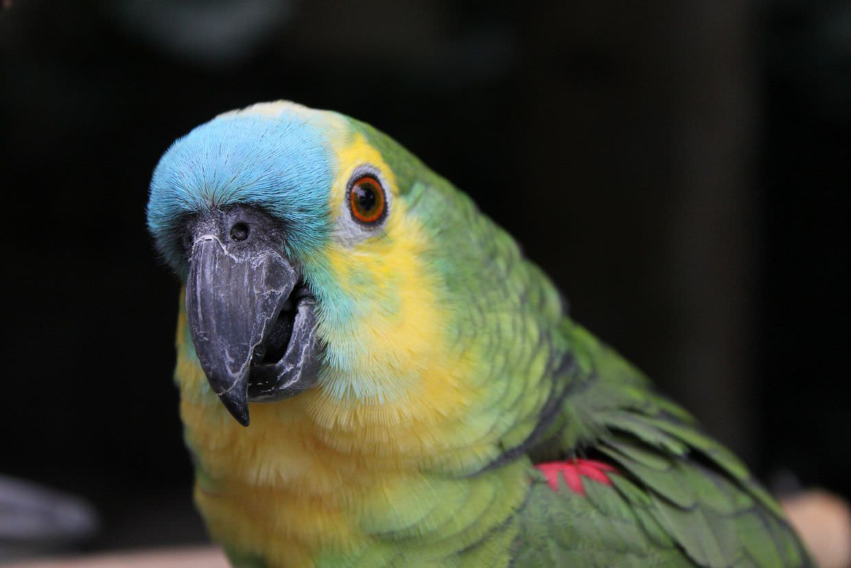 Pet parrot at Eliconial hotel