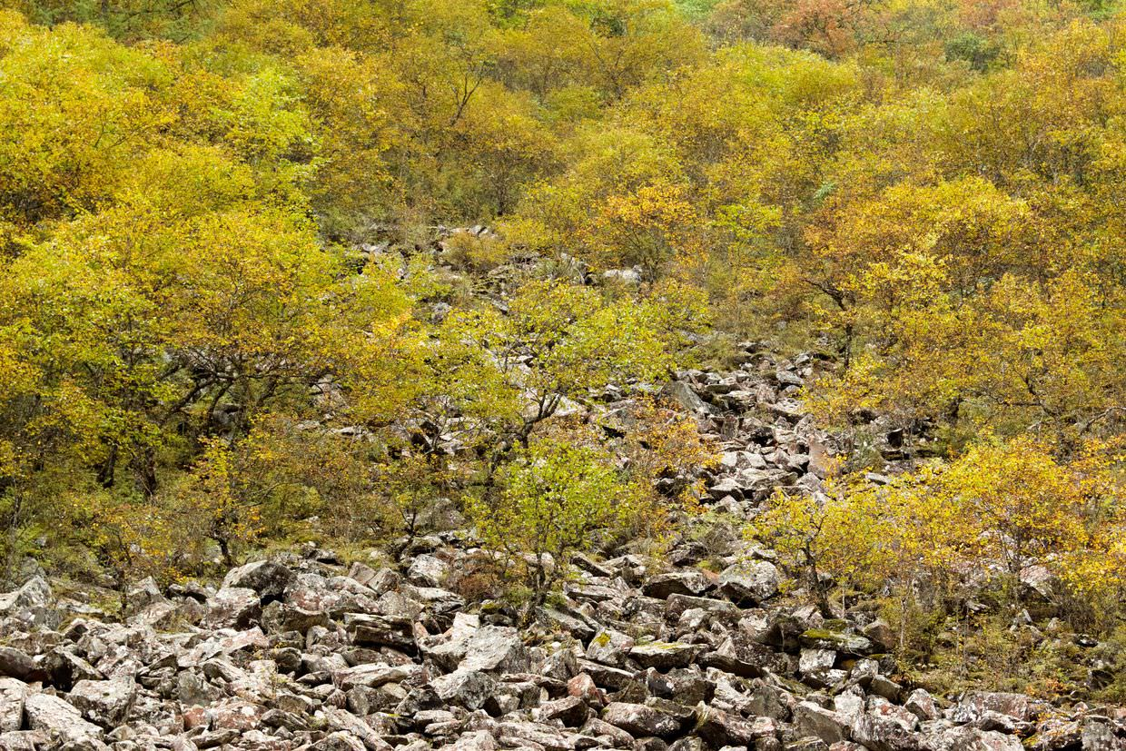 Autumnal colours in Huanglong
