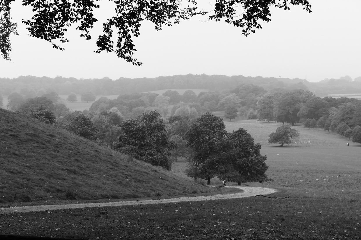 Petworth house and park