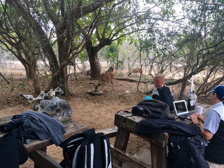 Nyala at camp