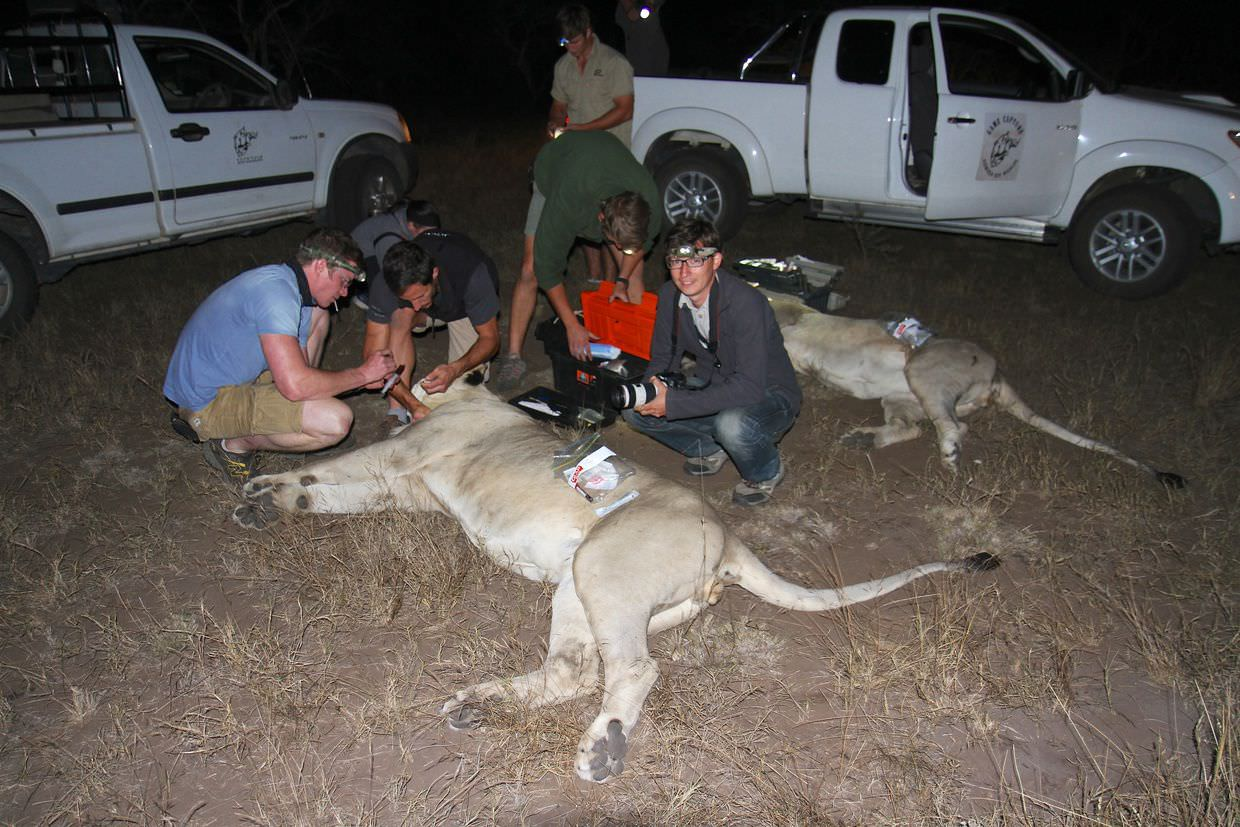 Me besides the lions and vets
