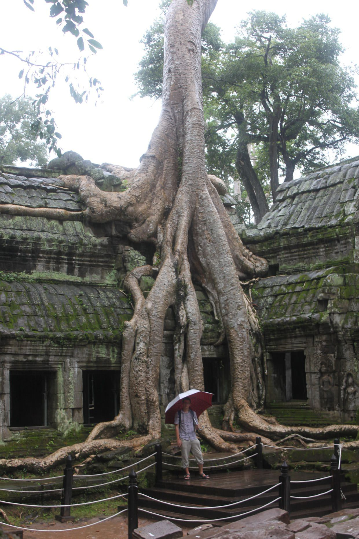 Paul and Ta Prohm's most famous tree