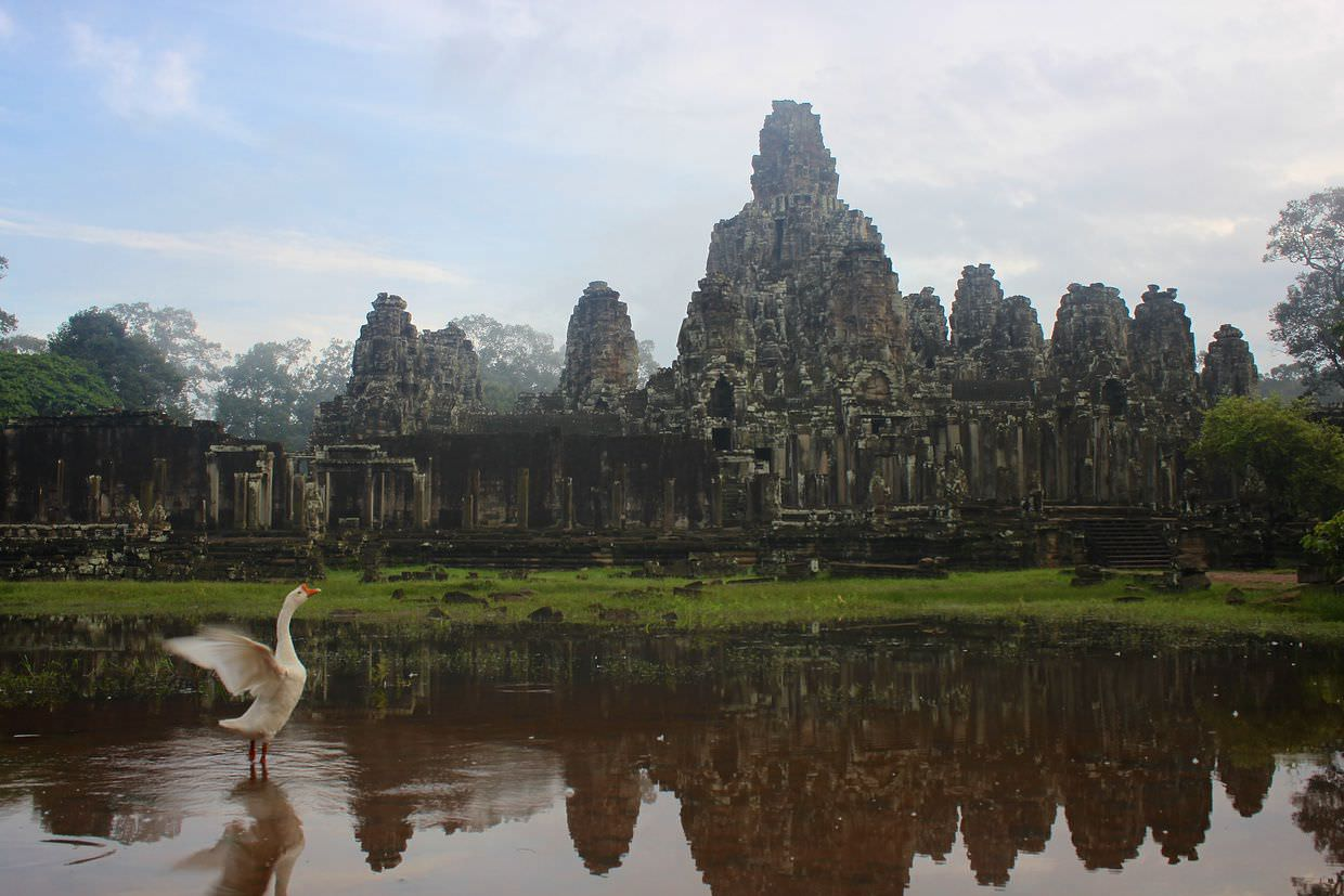 A goose stretching in front of Bayon temple