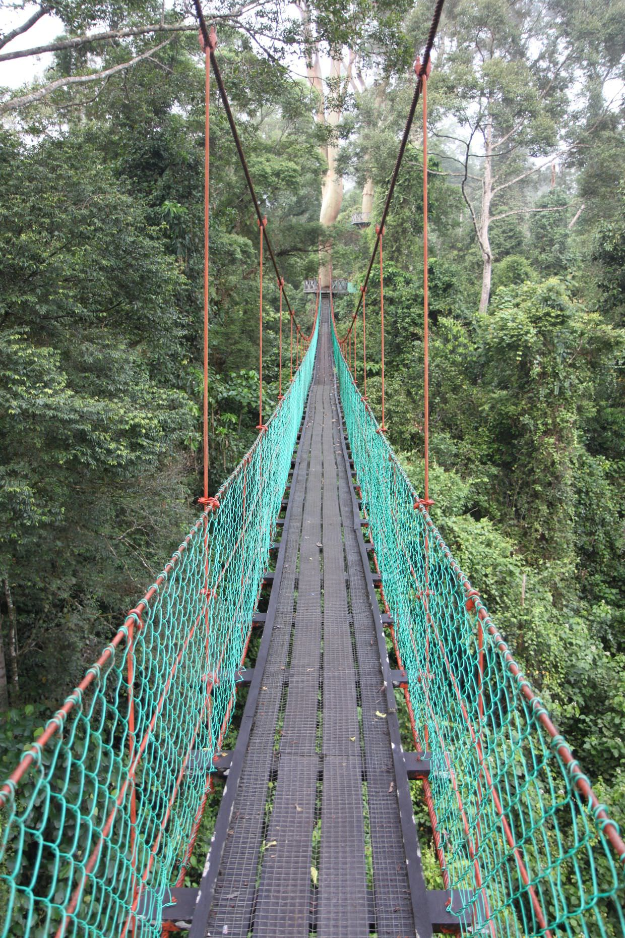 The rainforest lodge canopy walk