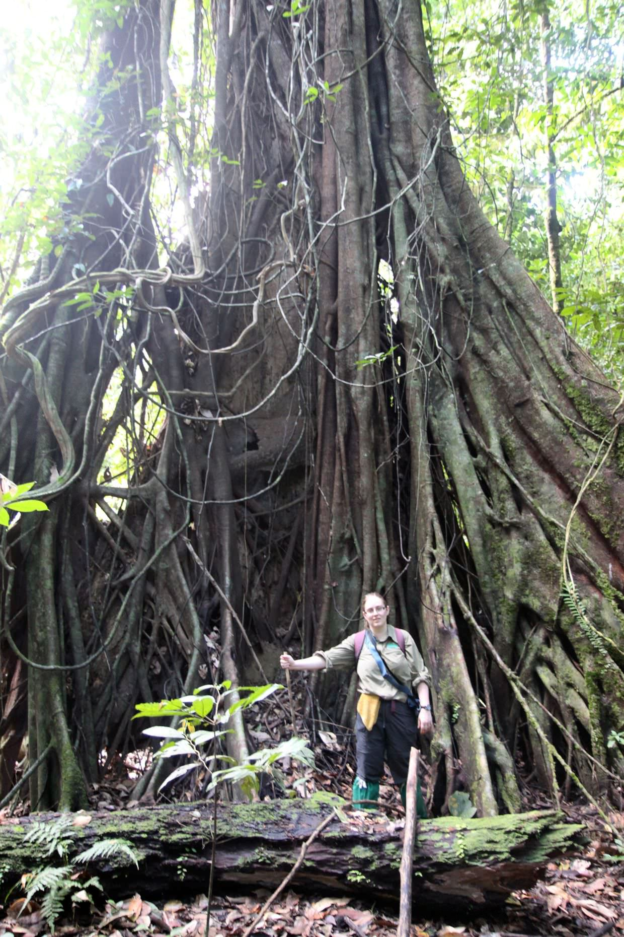 Samantha beneath a giant strangling fig