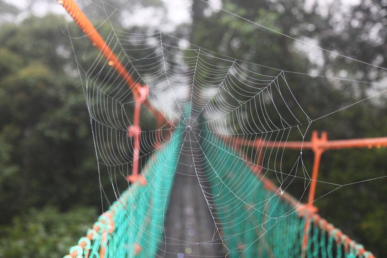 Spider's web across the canopy trail