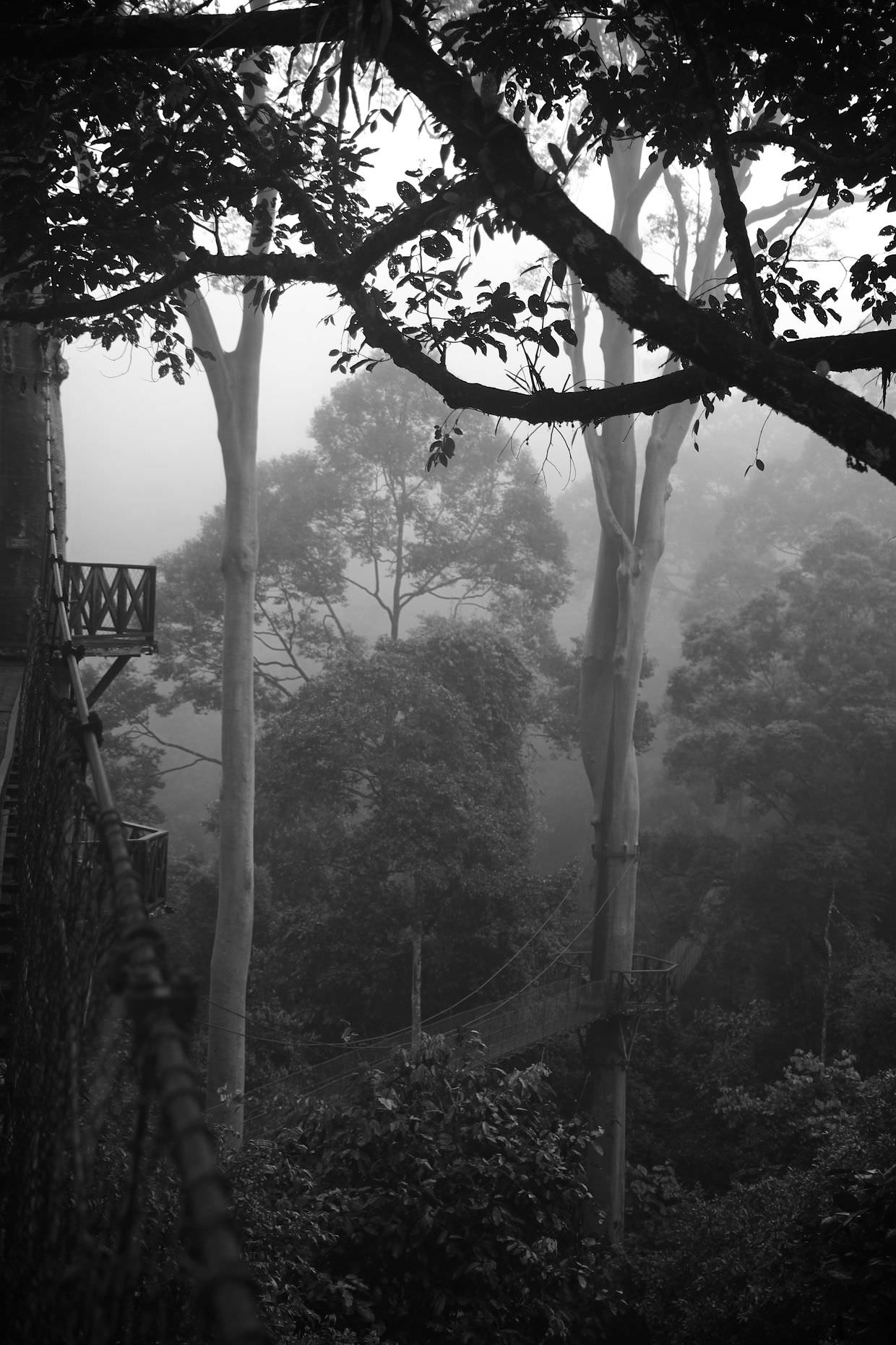 The morning jungle mist in Danum valley