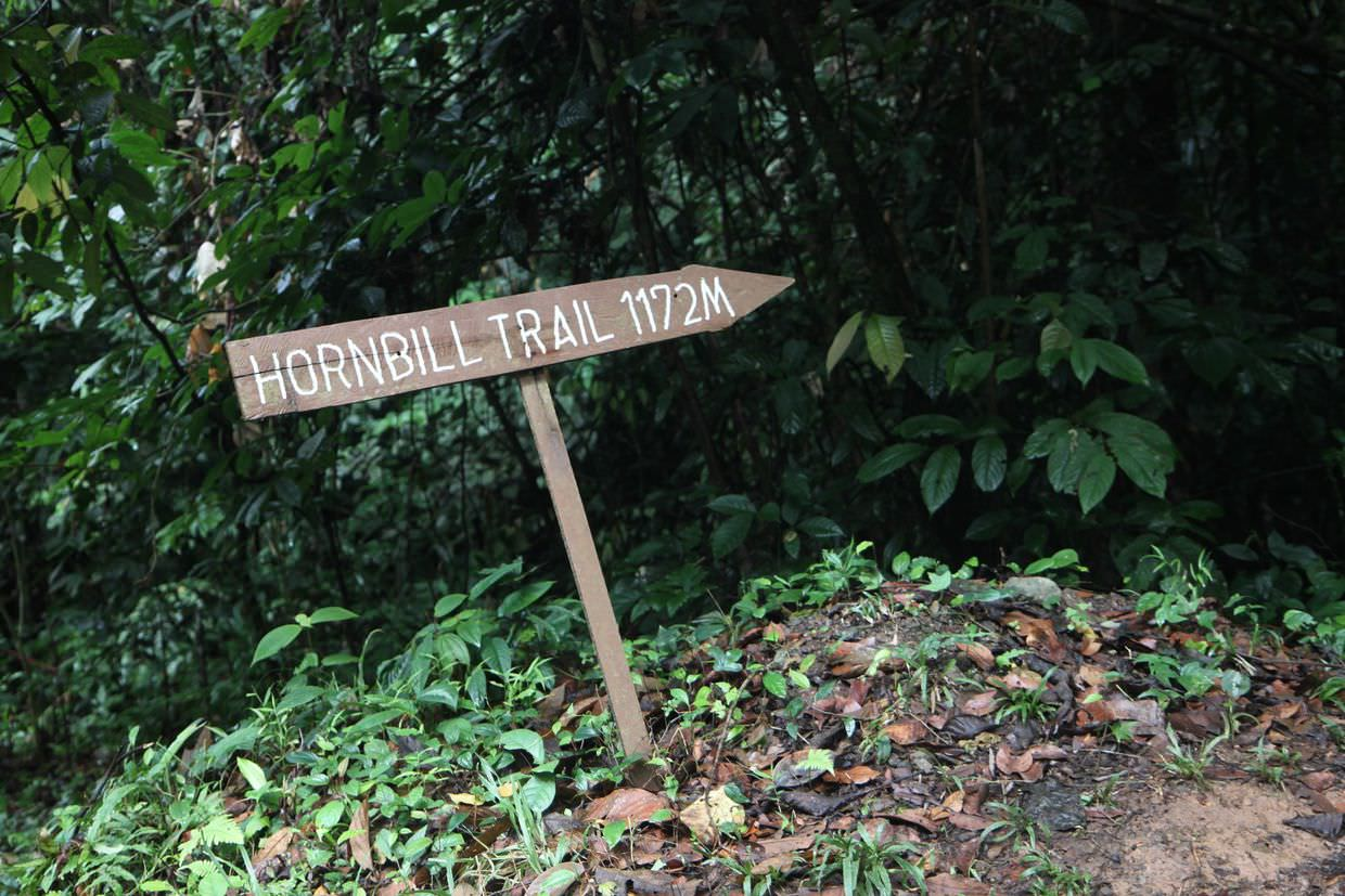 From the selamba trail to the hornbill trail
