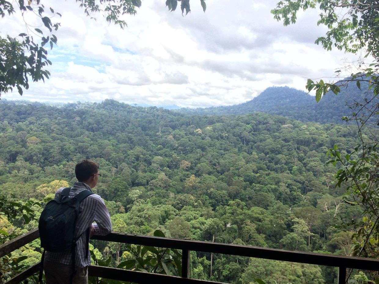 No signs of civilisation, rainforest in every direction