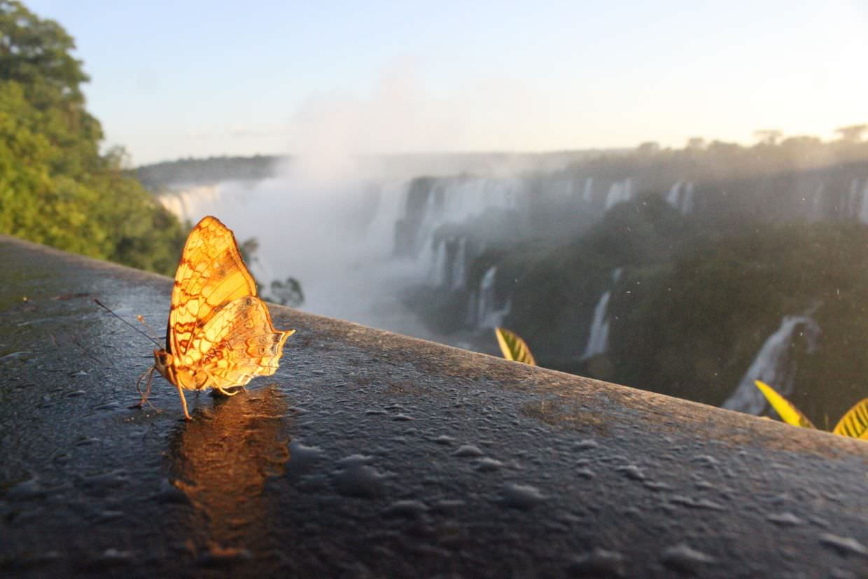 Butterfly and the falls, at sunset