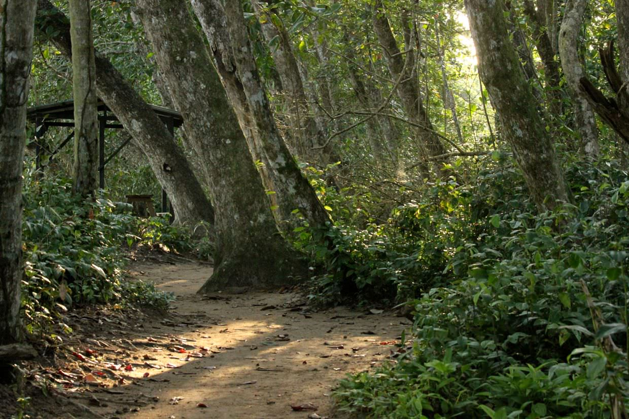 Cahuita National Park trail at dawn