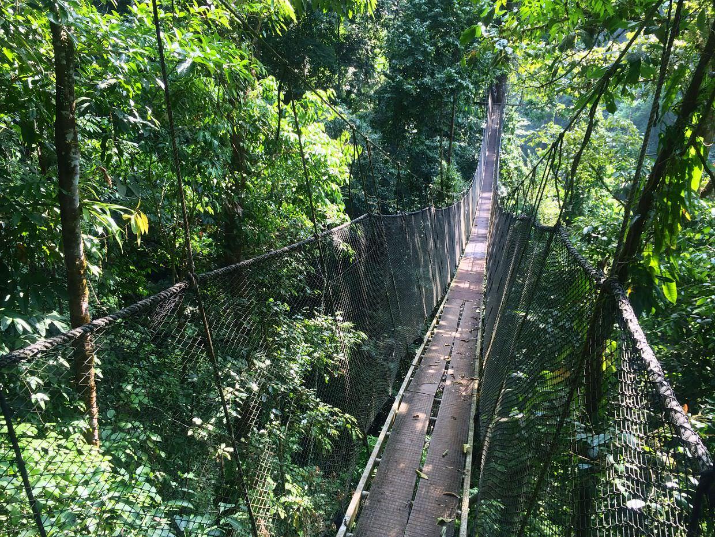 Hanging bridges at Rainmaker