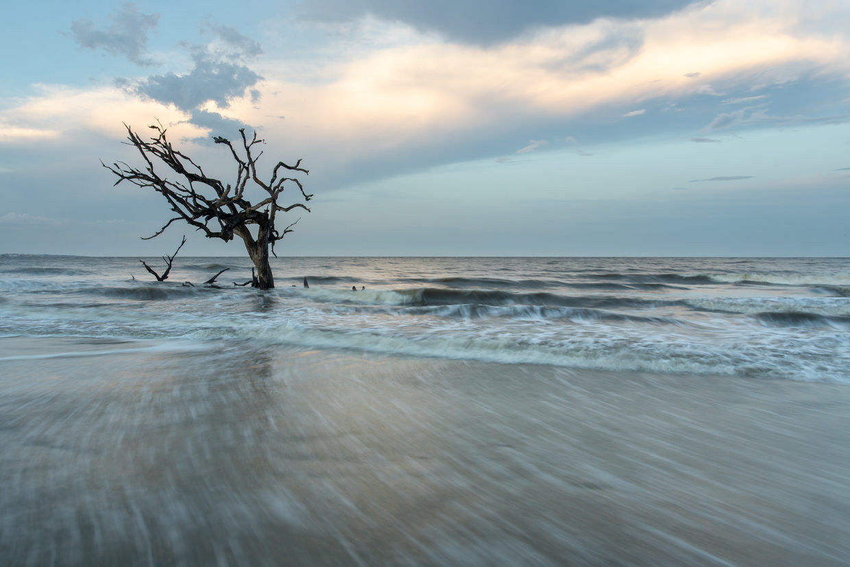 An old tree consumed by seawater