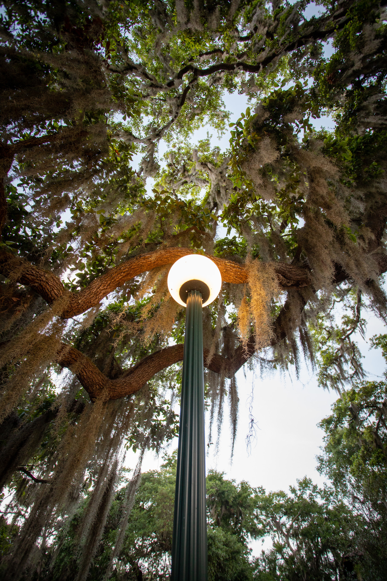 A walk beneath old spanish moss