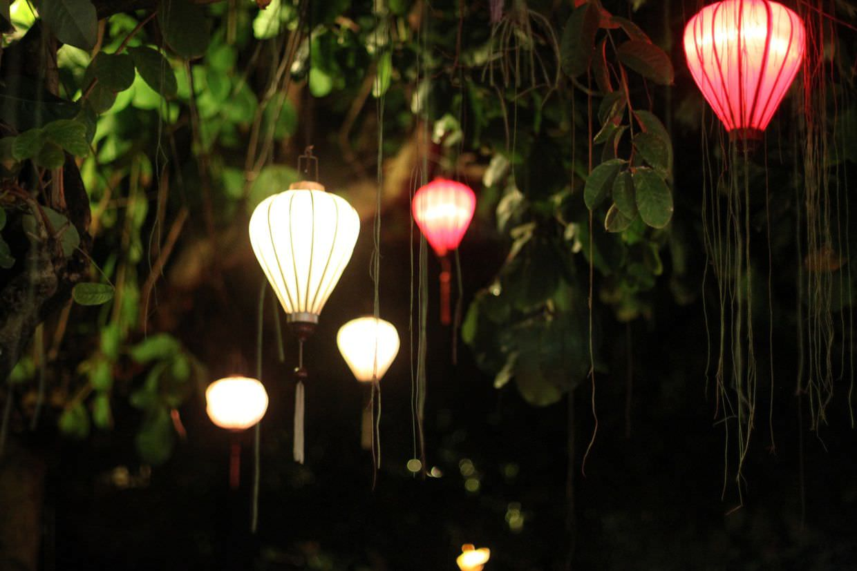 Lanterns hanging from a banyan tree