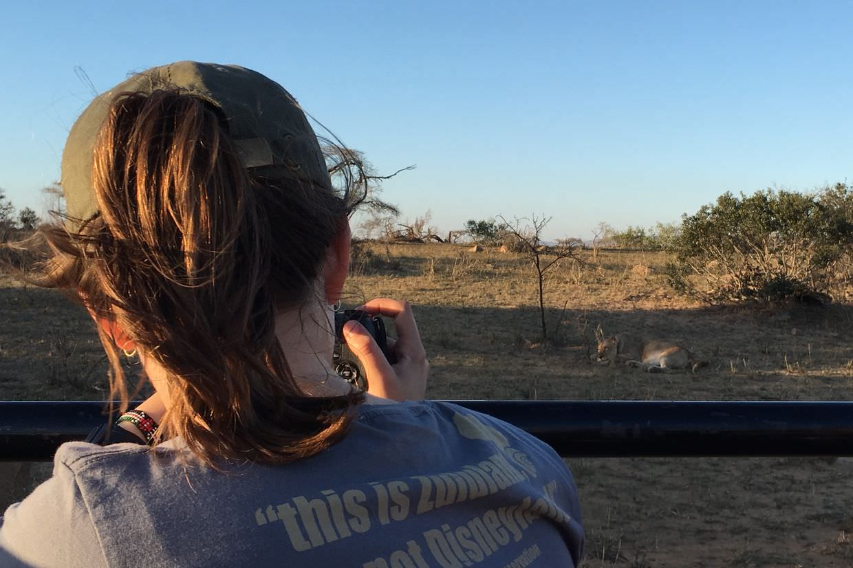 Claire photographing a lioness