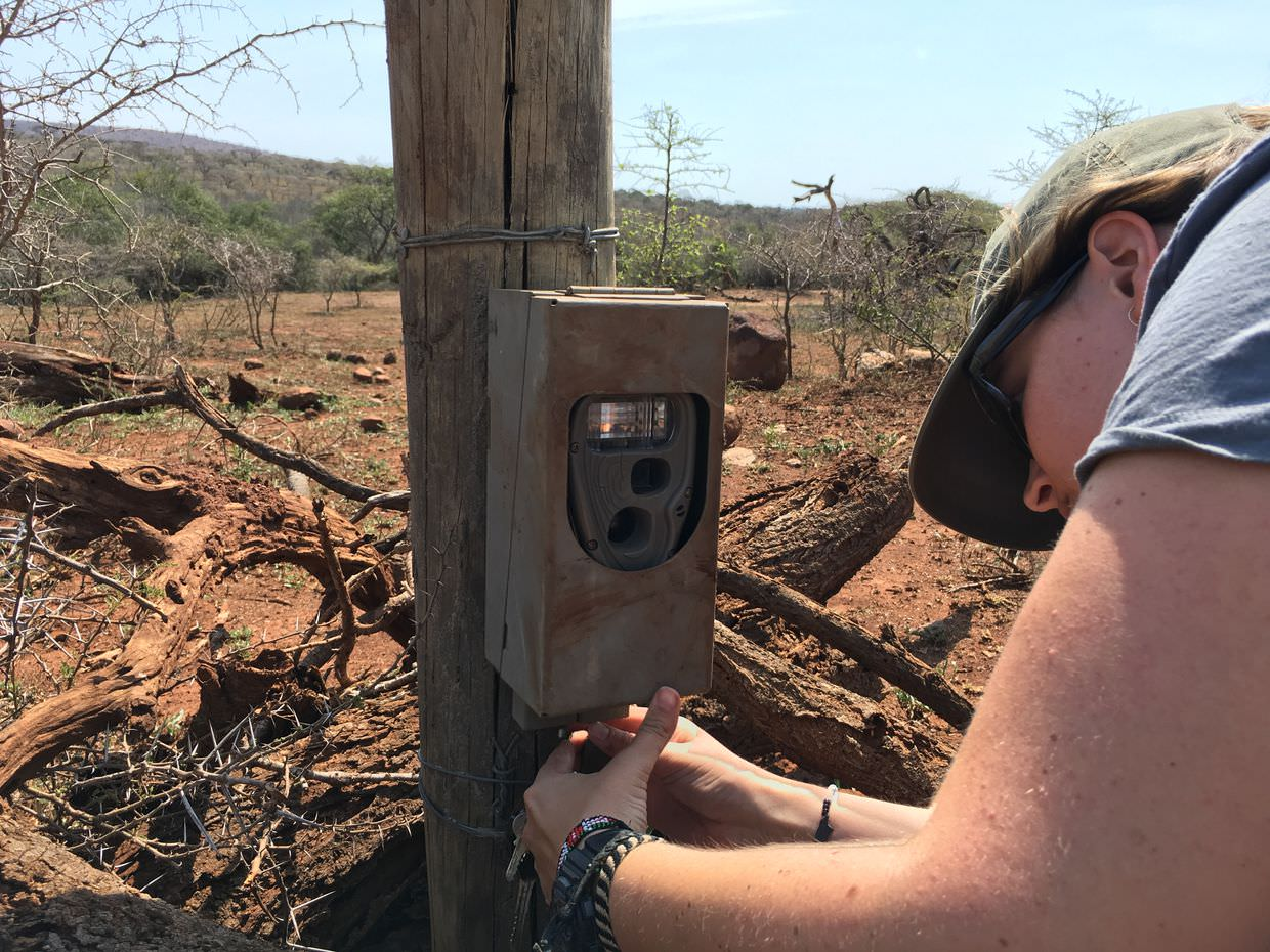 Claire changing a camera trap