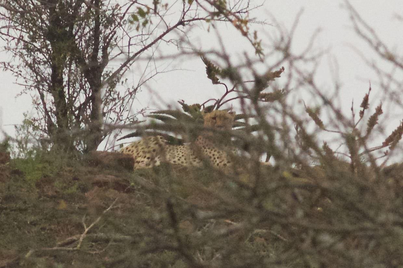 Cheetah CF7 high up on the hillside