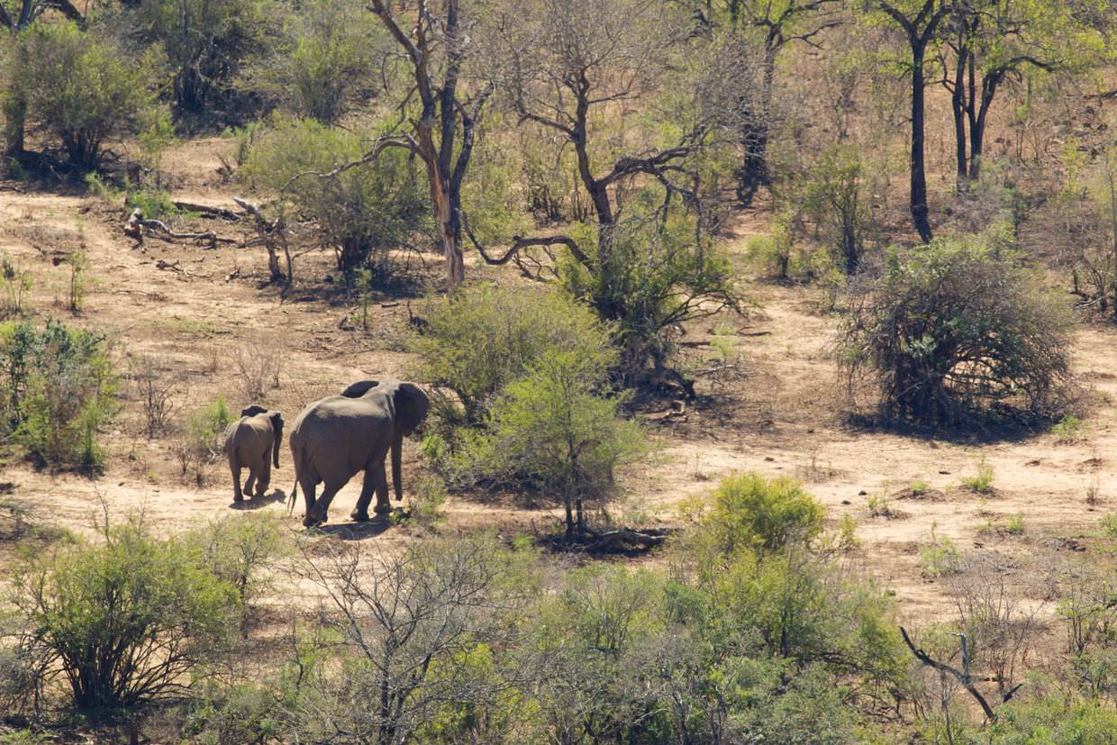 Elephants passing near to camp