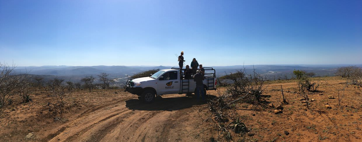 Scanning from Mpila hill, looking for wild dogs