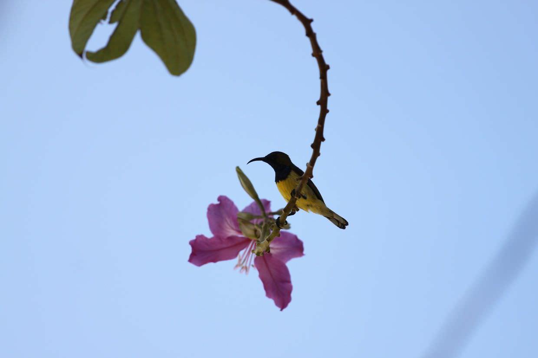 Tiny sunbird