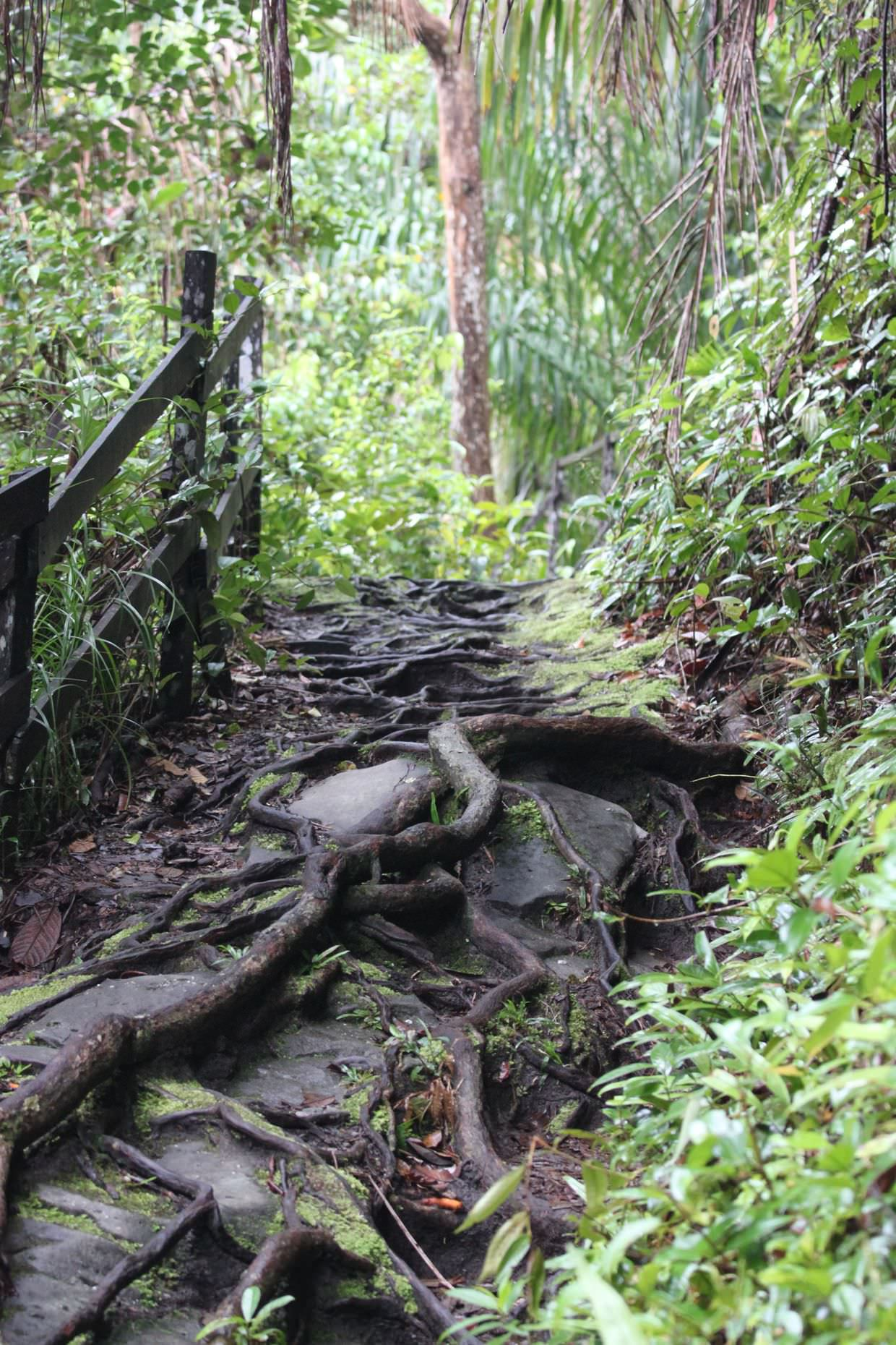 Gnarly trail with slippery tree roots