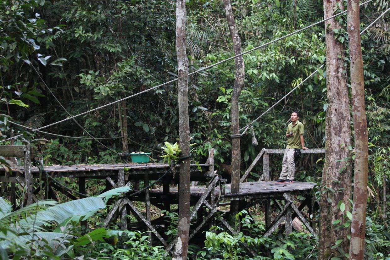 Waiting for orang-utan