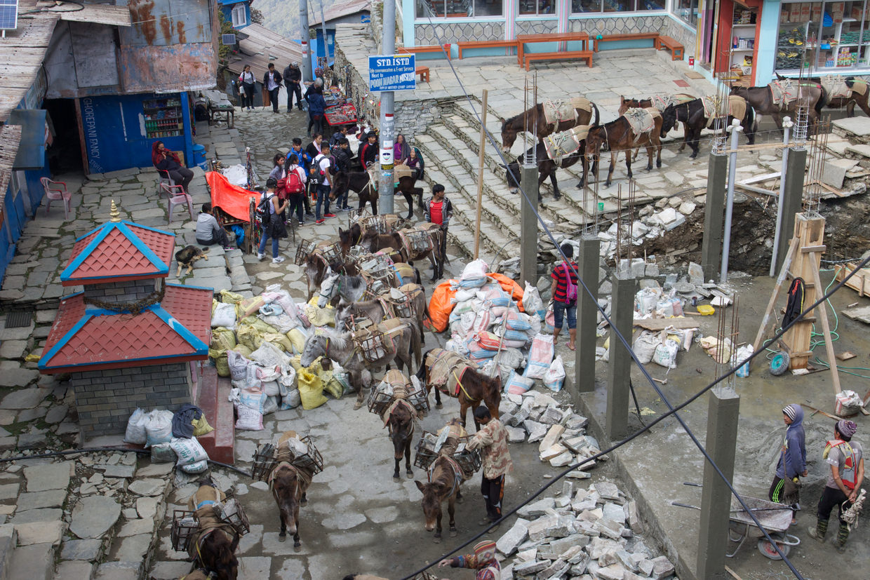 Building work in Ghorepani, donkey after donkey bringing more rocks