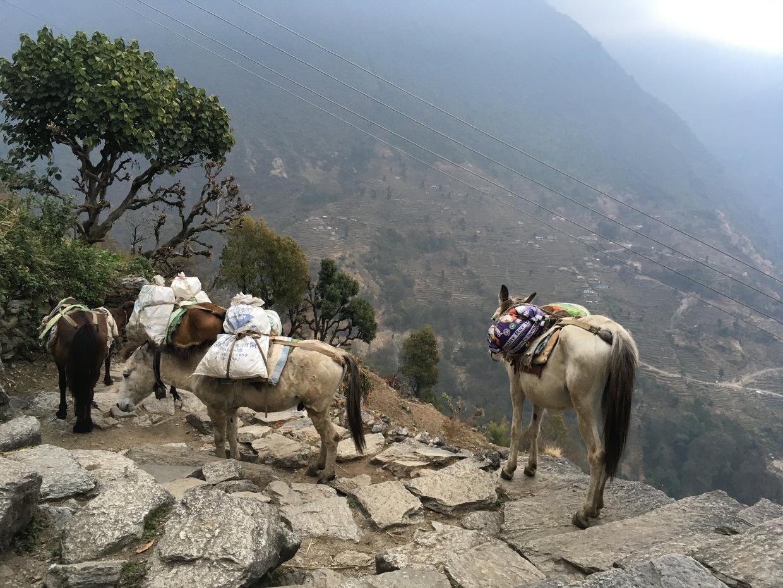 Donkeys on the steps to Ulleri