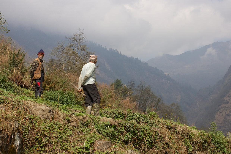 Farmers tending their land
