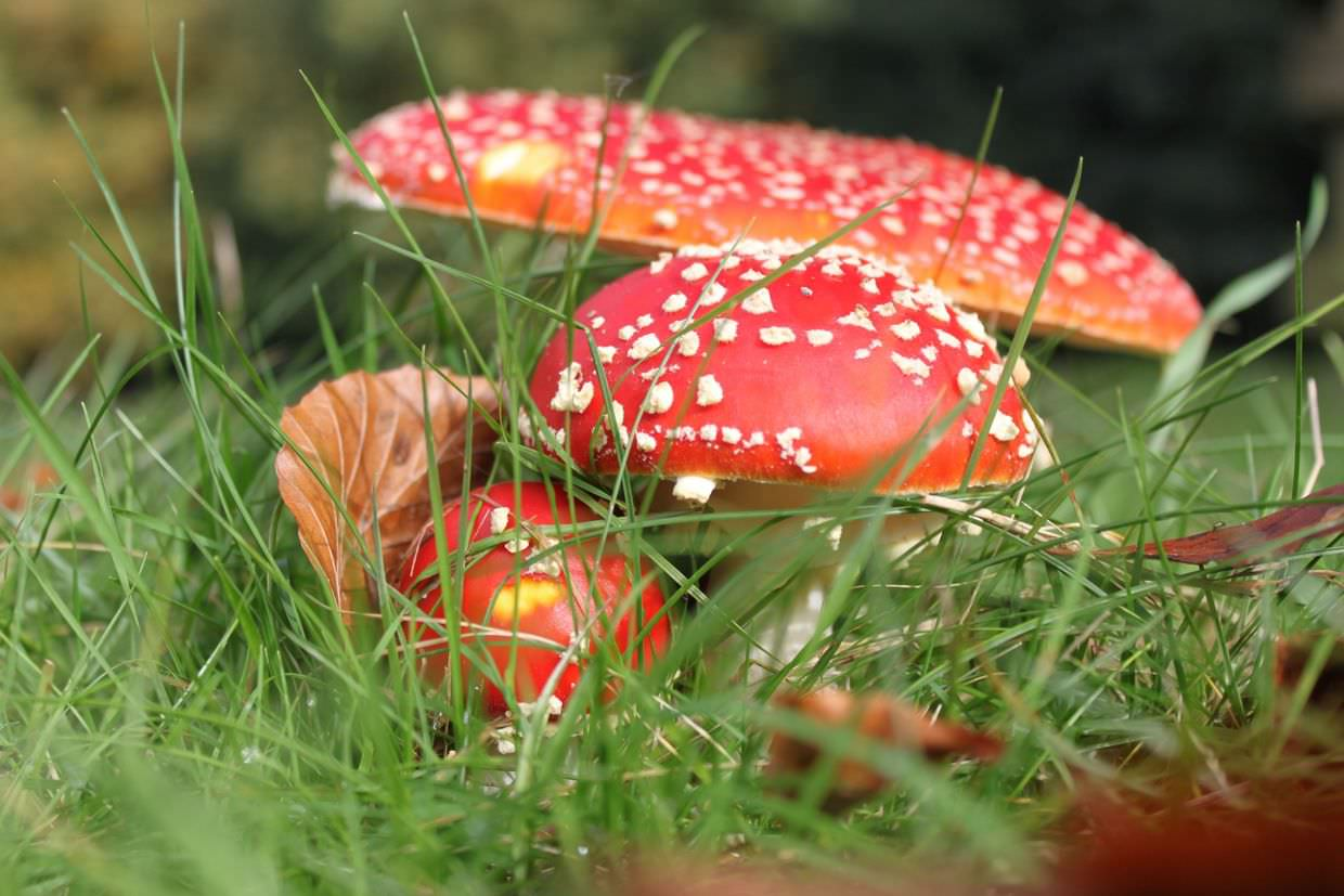Mushrooms in autumn