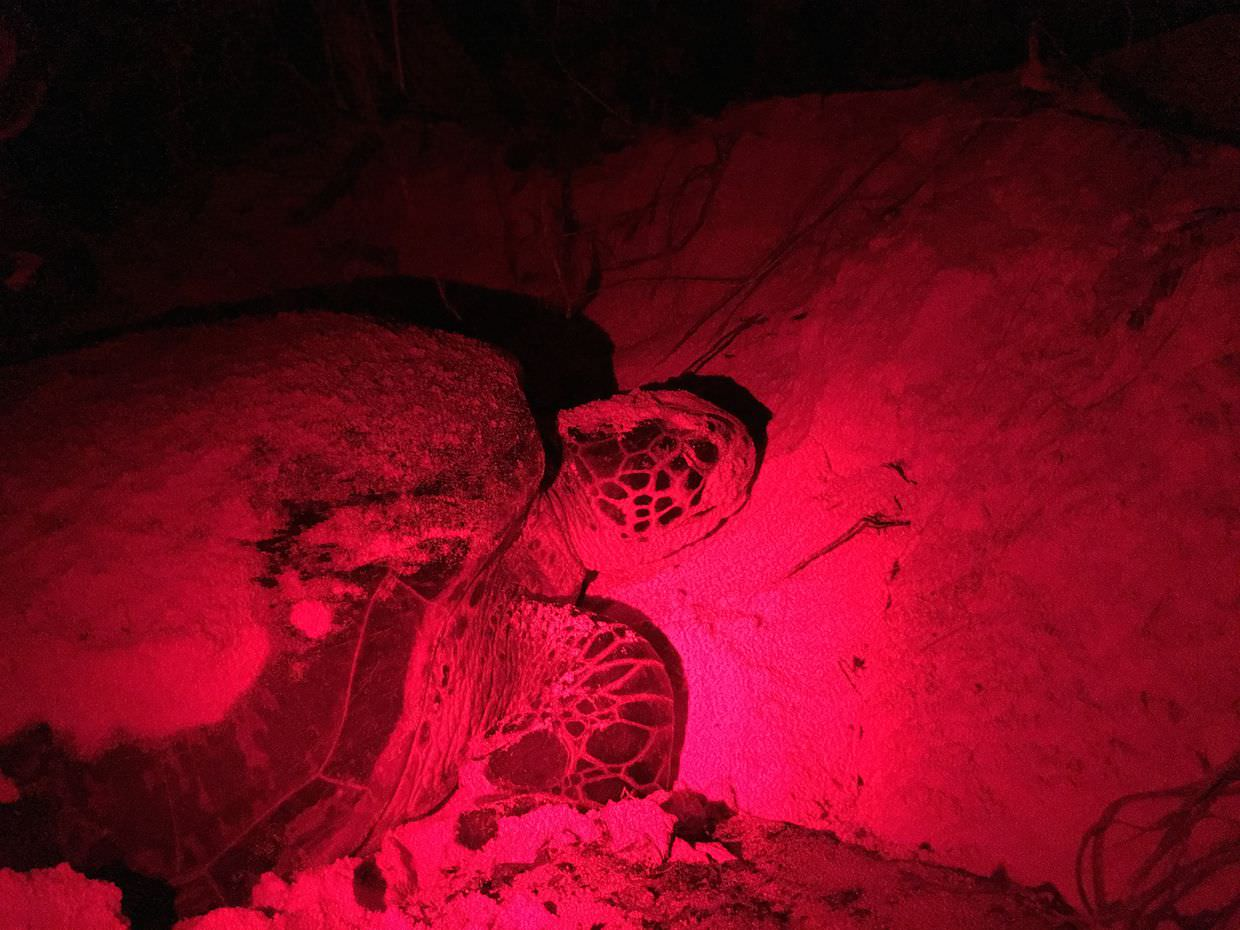 Turtle 2, photo for identification