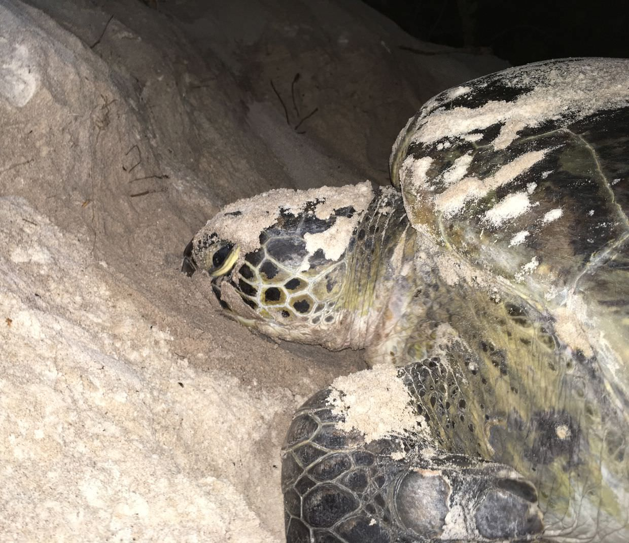 Turtle 3's face, used for identification