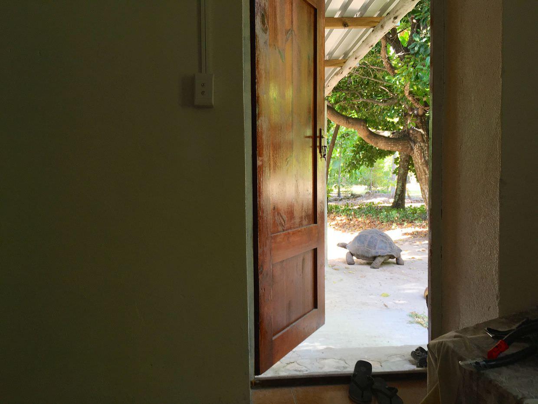 Tortoise 38 outside our volunteer house