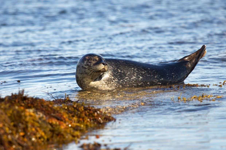 Kirkcolm Seal