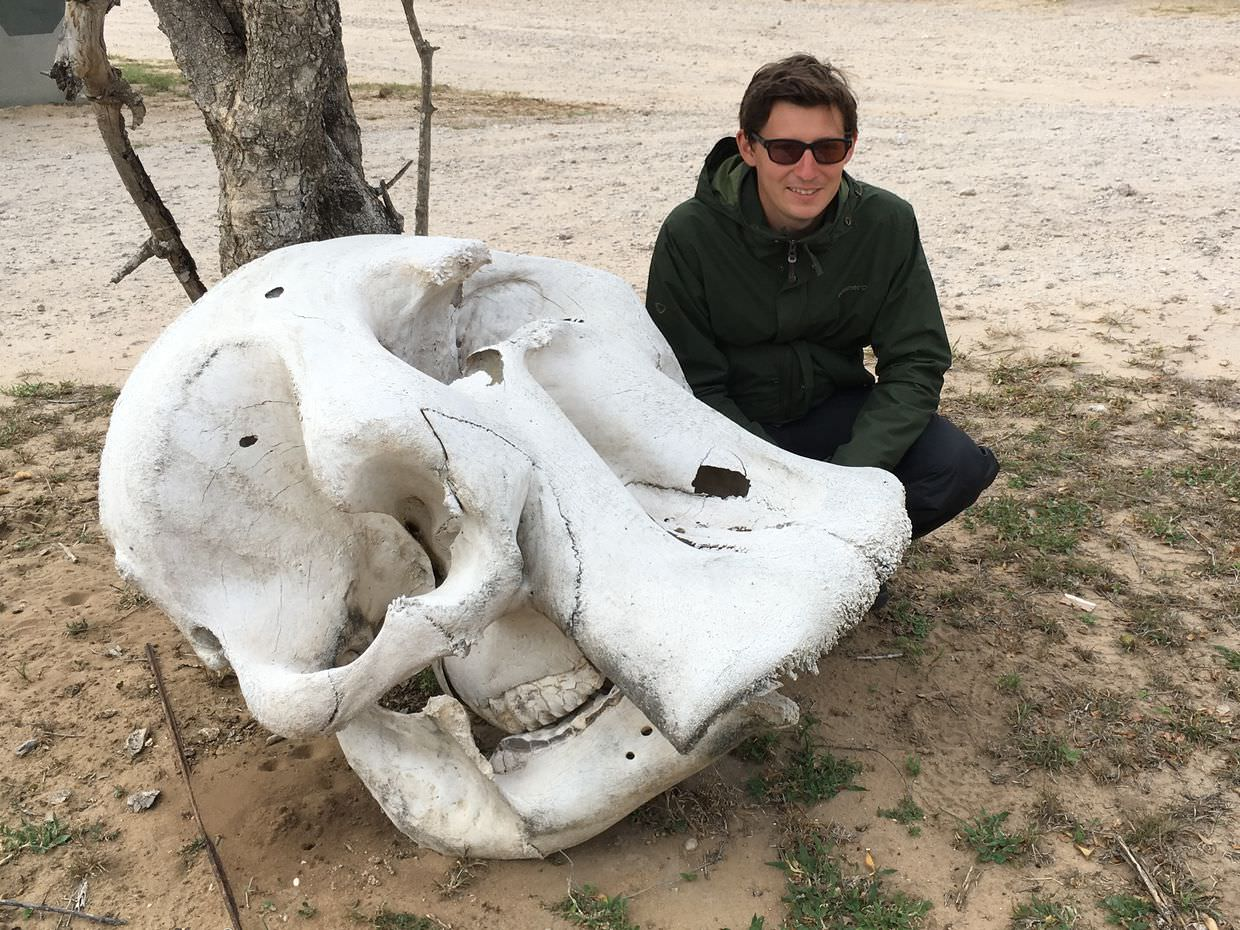 Me besides an elephant skull while the truck is getting cleaned