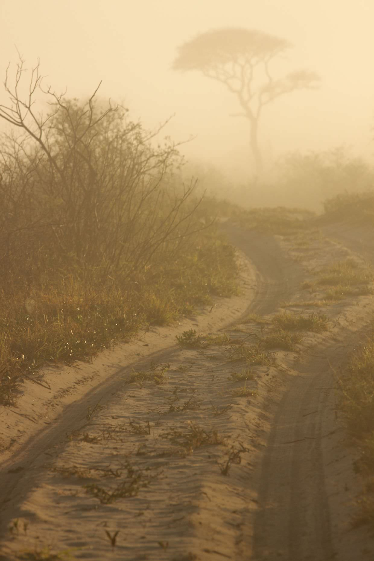 A misty morning drive