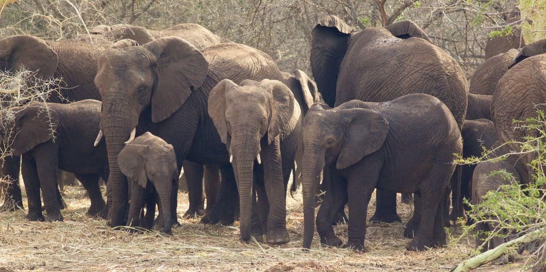 Elephants near to camp