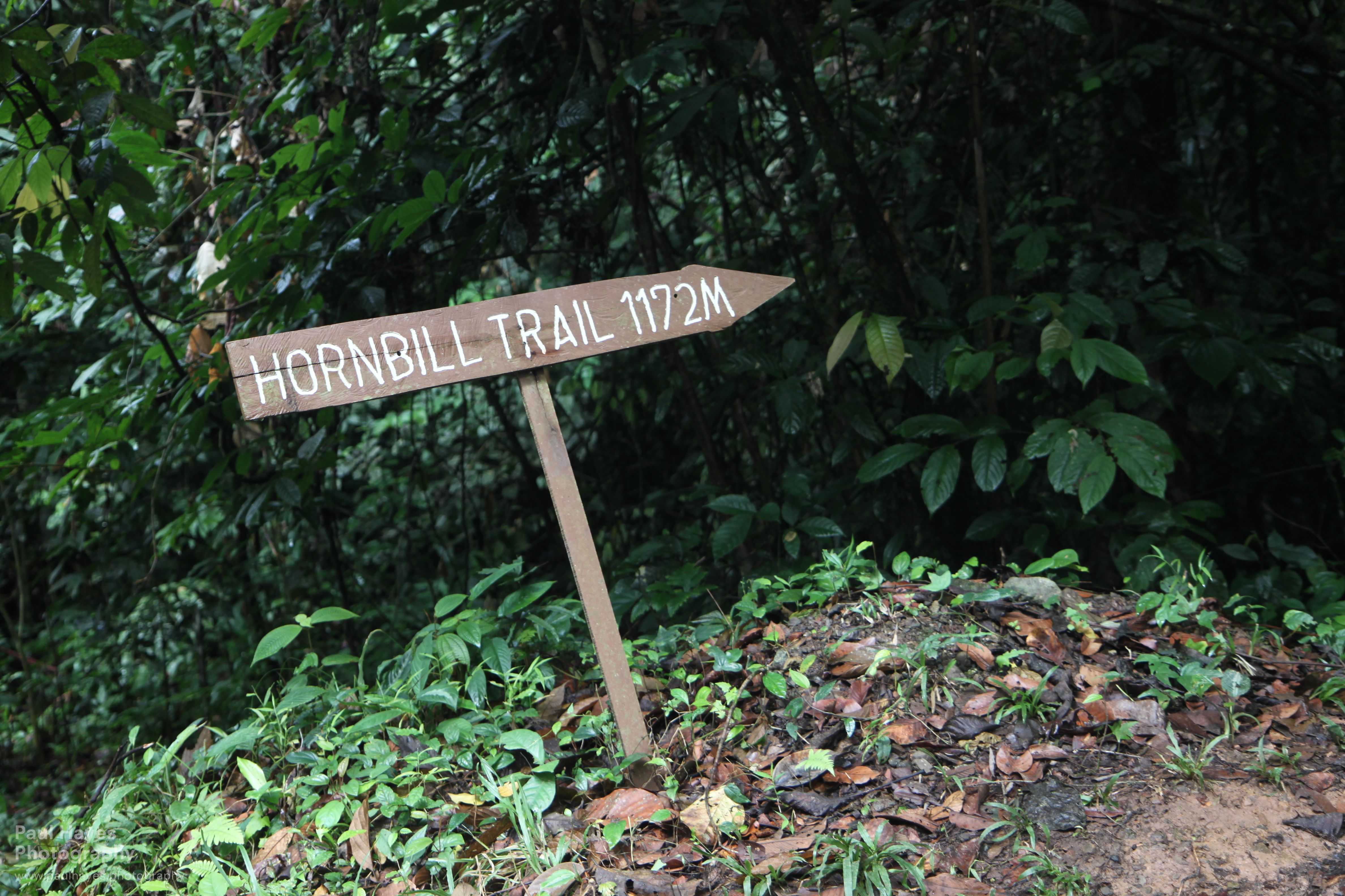 One last trek and a wild great argus borneo rainforest lodge for Trail lodge
